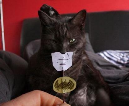 batman_cat
