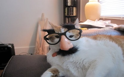 cat_disguise