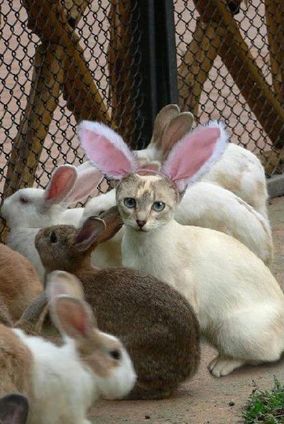 cute-cat-in-disguise