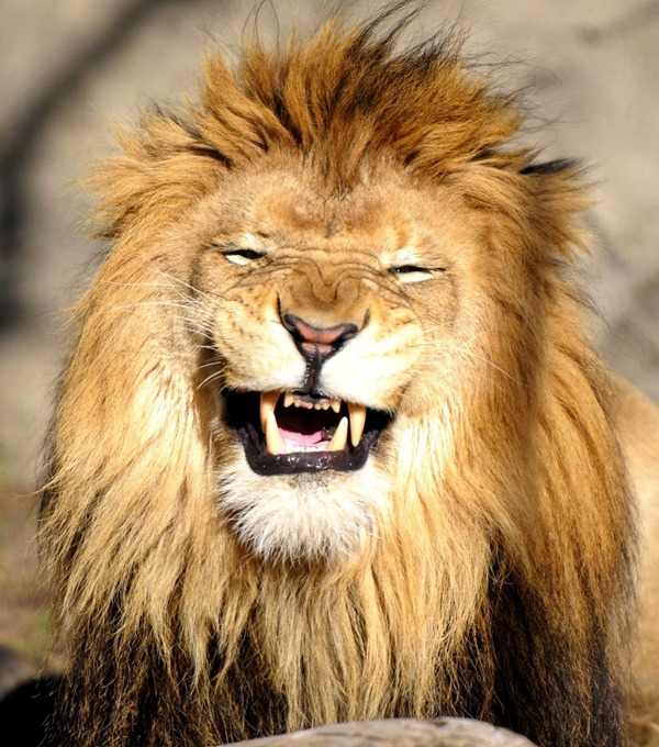 """""""They don't call me the fucking King Of The Jungle for nothing baby"""""""